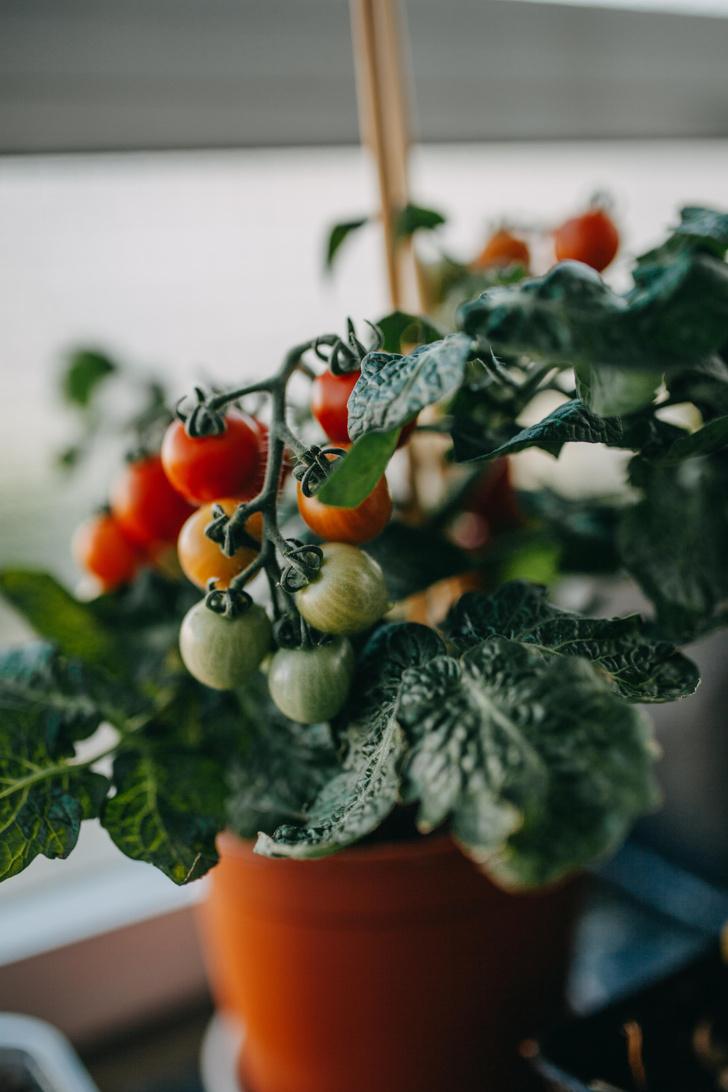 Фото №3 - Календарь садовода: что и когда сажать дома и на даче