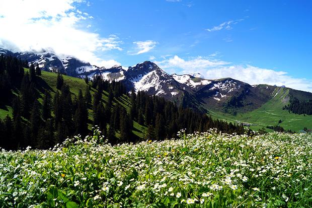 Фото №3 - Летняя Швейцария: горы возможностей для семейного отдыха