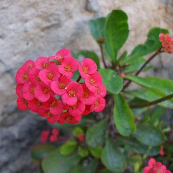 Фото №7 - Комнатные растения для ленивых