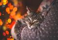 Коты полезны для здоровья?