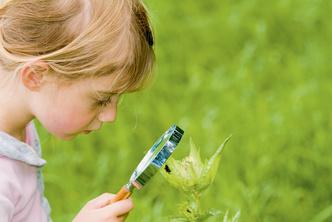 Фото №2 - Комары, пчелы, клещи...