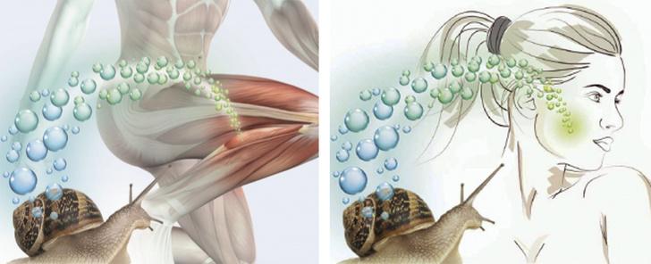 Фото №3 - Новая биологически активная добавка-афродизиак набирает популярность