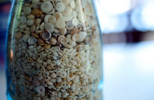 ракушки в вазе