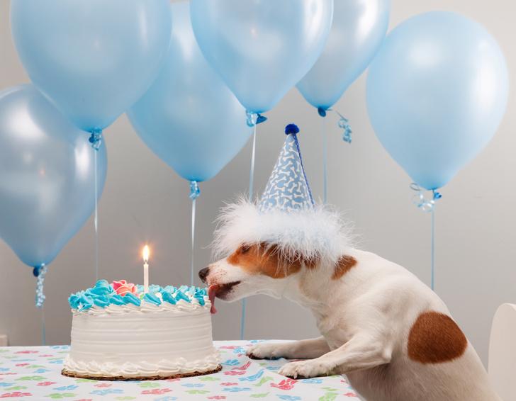 Фото №1 - Таблица: возраст собаки по человеческим меркам