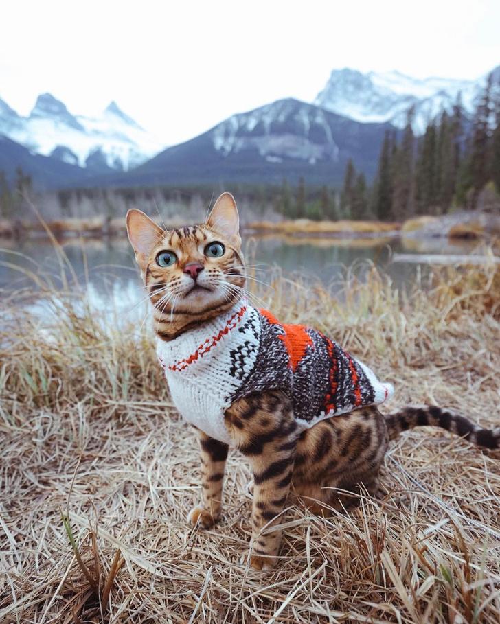 Фото №2 - Замурчательные компаньоны: коты-путешественники