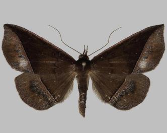 Фото №4 - Эффект бабочки: как чешуекрылым насекомым удается оставаться для нас таинственными незнакомцами