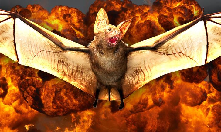 Фото №1 - Как американцы потратили миллионы долларов на создание бомб из летучих мышей и почему из этого ничего не вышло