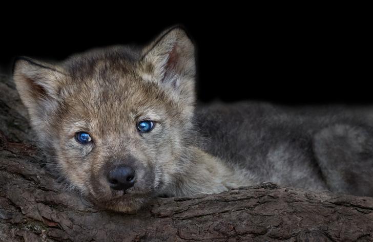 Фото №11 - Как выглядят детеныши самых опасных животных: 40 милейших фото