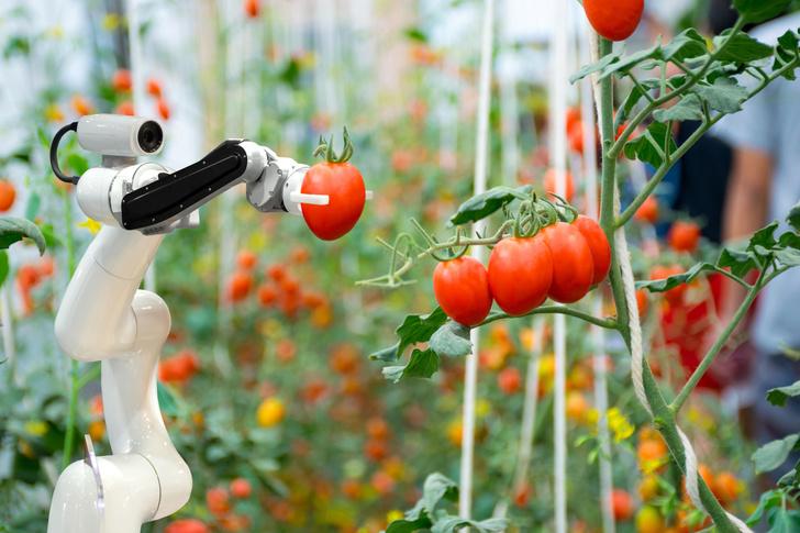 Фото №11 - Новый робот борозды не испортит. Об успехах сельского хозяйства XXI века