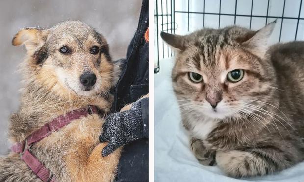 Фото №1 - Котопёс недели: собака Лея и кошка Луша