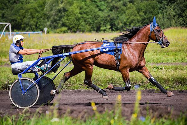Фото №16 - Девушки на коне: самые романтичные наездницы Ульяновска