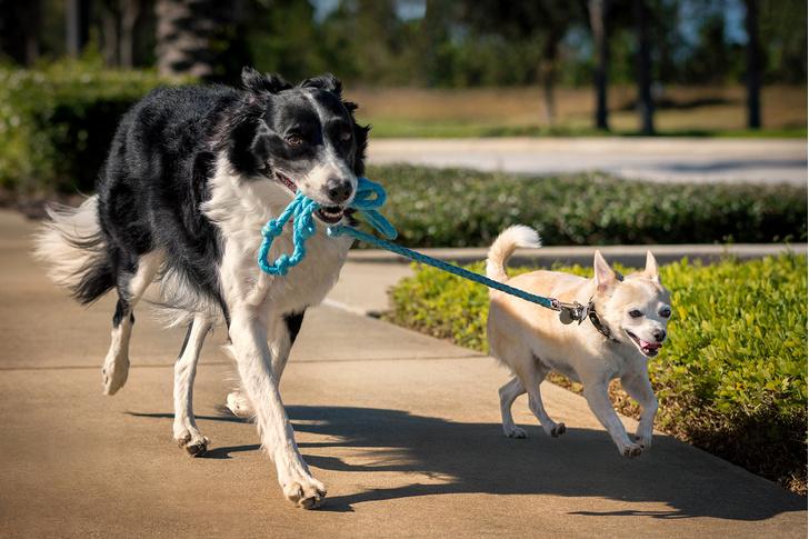 Фото №2 - Ученые назвали самые умные и самые глупые породы собак