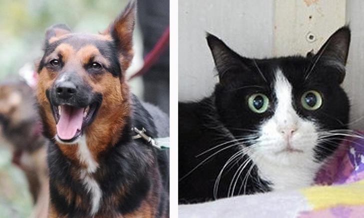 Фото №1 - Котопёс недели: собака Чили и кошка Сефора