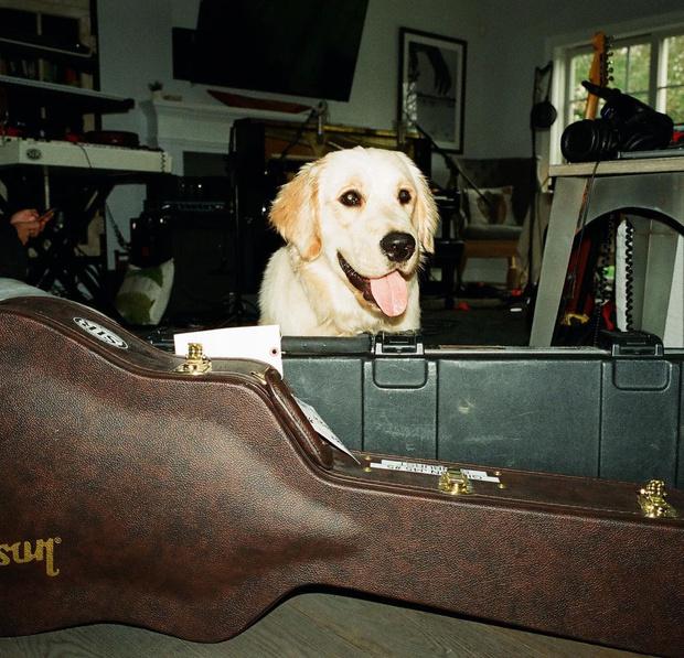 Фото №2 - Too cute: у собаки Шона Мендеса и Камилы Кабелло появился Инстаграм 🥰