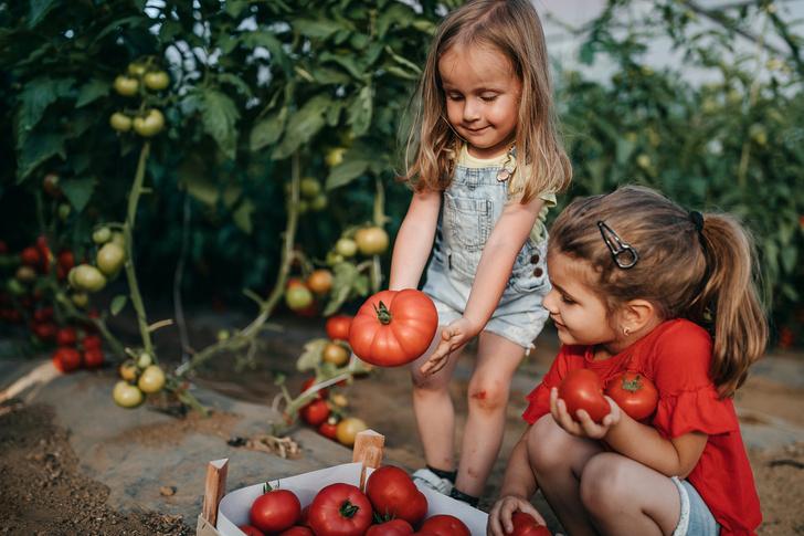 Фото №1 - 6 фактов о помидорах, которые обязаны знать родители малышей