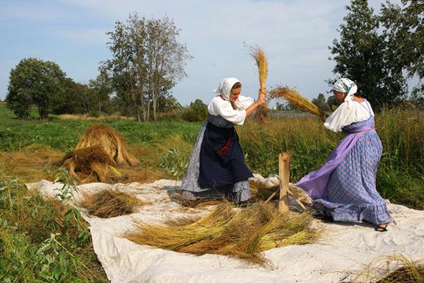 Фото №4 - Фестиваль «Зеленые луга» – твои чудесные выходные!