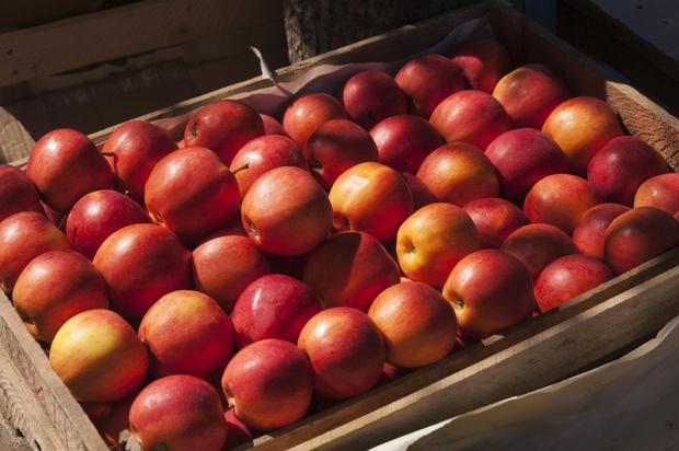 Фото №1 - Яблочная диета: экспресс-похудение и детокс