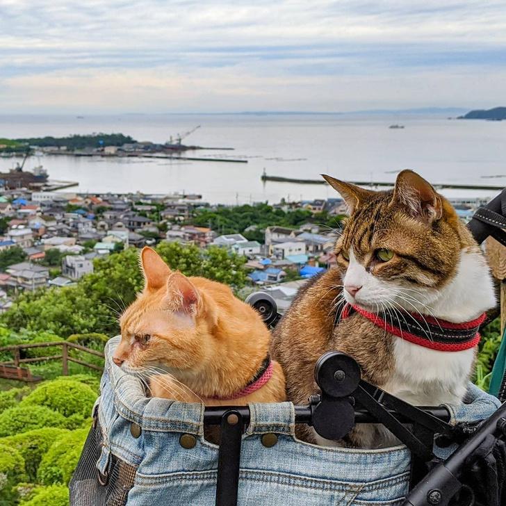Фото №10 - Замурчательные компаньоны: коты-путешественники