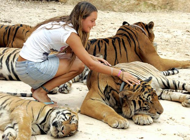 Фото №3 - 5 популярных заблуждений о животных, в которые все верят