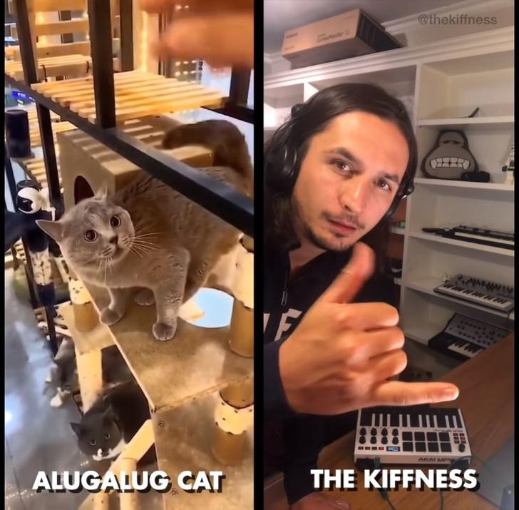 Фото №1 - Ремикс на странные вопли кота стал вирусным на YouTube