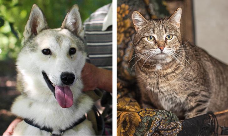 Фото №1 - Котопёс недели: пёс Ной и кот Спартак