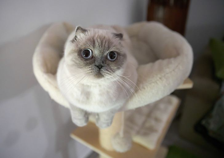 Фото №3 - 10 причин, почему у вас дома должен жить кот