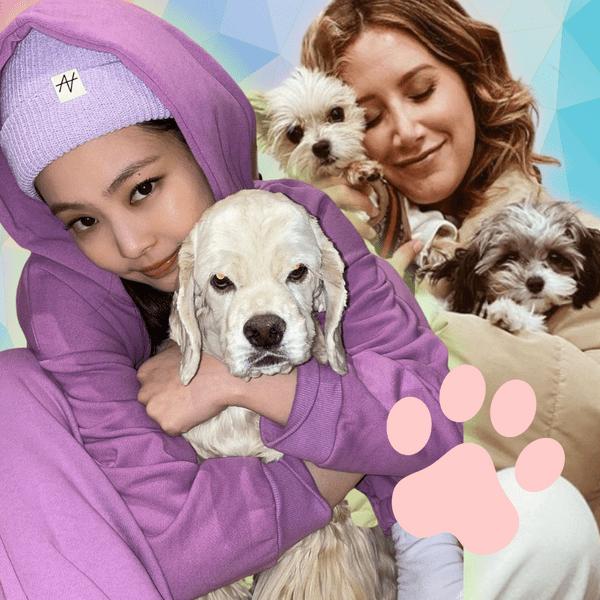Фото №1 - Какие породы собак выбирают знаменитости? 🐶