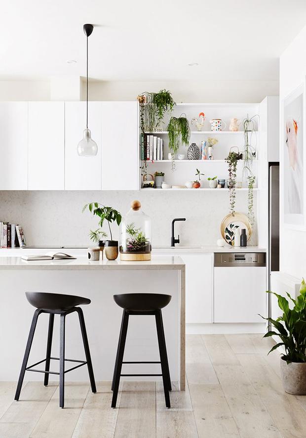 Фото №7 - Растения на кухне: 7 практичных идей