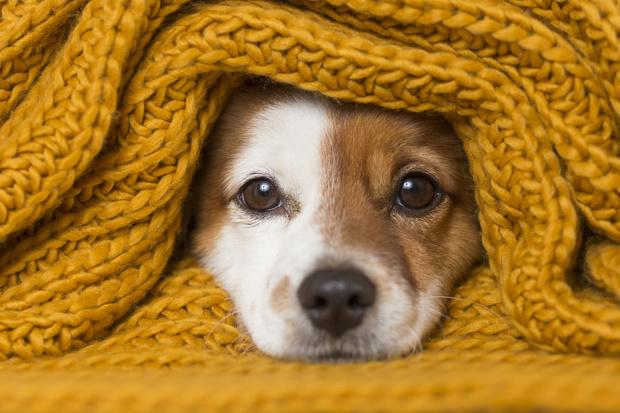 собаки которые мерзнут на улице