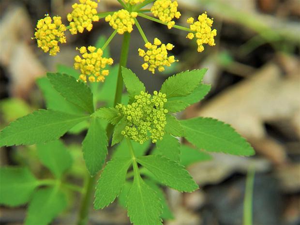 Фото №2 - Опасная ботаника: от каких растений стоит держаться подальше