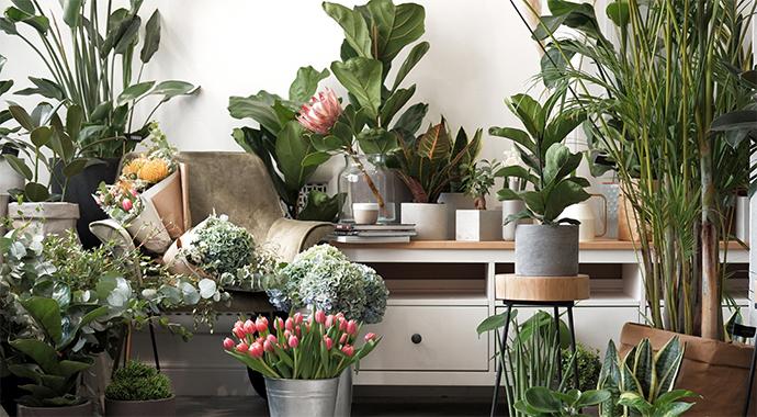Как комнатные растения позволяют нам лучше узнать себя
