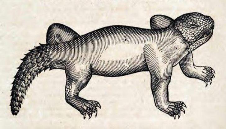 Фото №17 - Как в старину художники изображали животных, которых никогда не видели (25 странных существ)