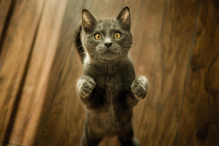 Коты генетически похожи на людей.
