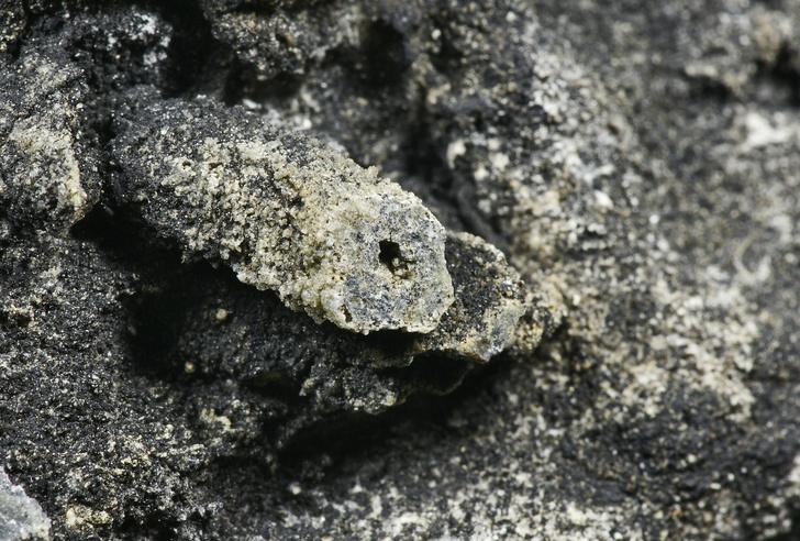 Фото №1 - «Черновики господа Бога»: загадочные организмы докембрия