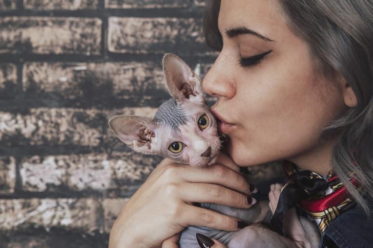 как отучить кошку гадить мимо лотка
