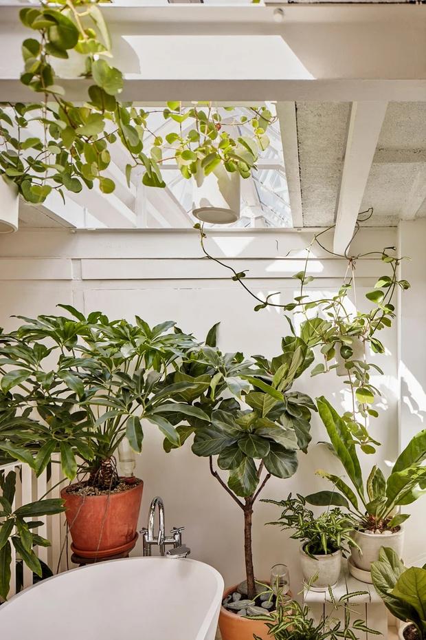 Фото №2 - С чего начать озеленение квартиры: советы эксперта