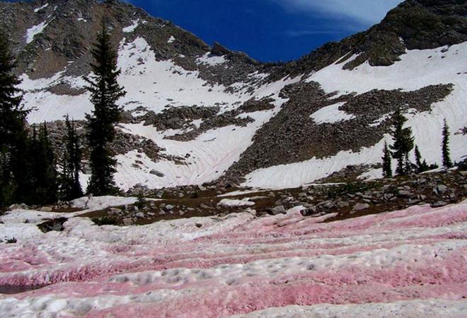 розовый арбузный снег
