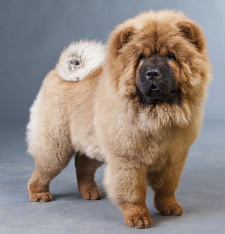 Породы собак для детей: список пород с фото и описанием | 785x755