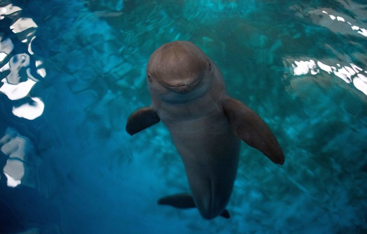 Фото №5 - «Дикие» герои: 5 невероятных историй спасения людей животными
