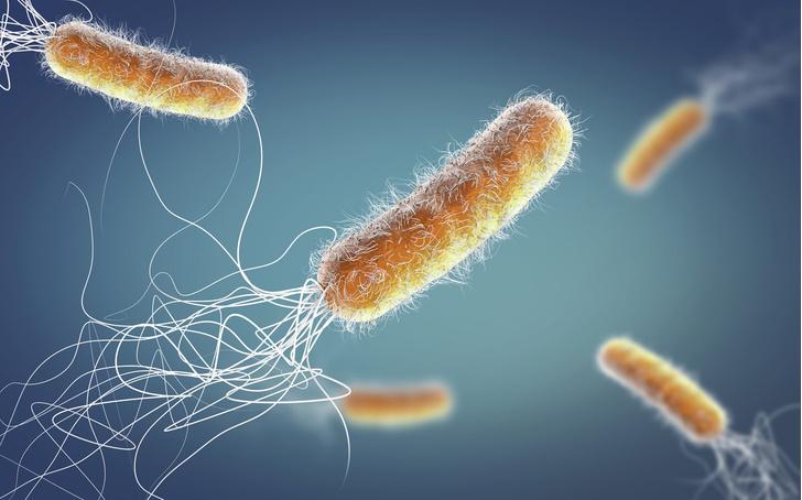Фото №1 - Из какого языка происходит слово «бактерия»?