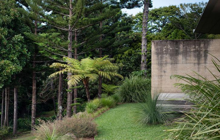 Фото №5 - Тропический сад в Австралии