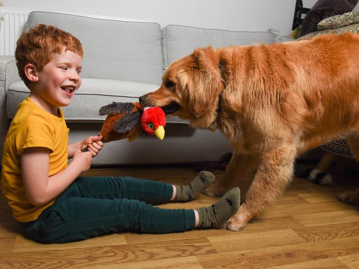 Фото №3 - Пес-поводырь стал нянькой и лучшим другом слепому малышу: трогательные фото