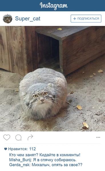 Фото №6 - Если бы у зверей был «Инстаграм»: 20 блогеров из зоопарка