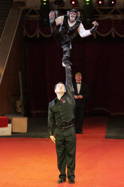 Фото №4 - В Воронеж приедет цирк династии Запашных