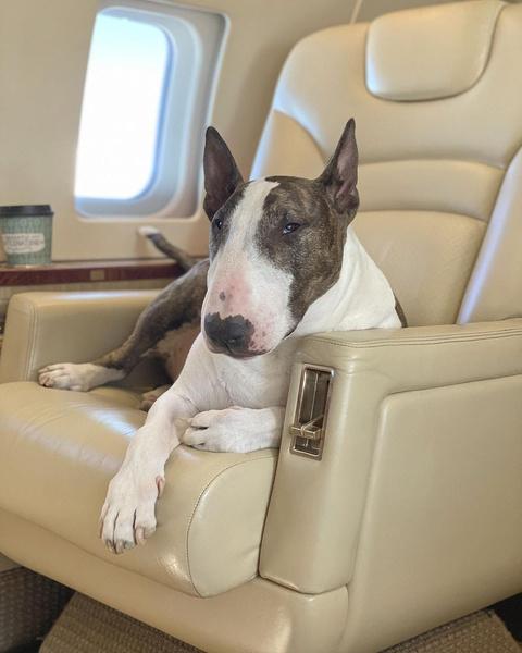 Фото №19 - Домашние животные звезд: собаки, кошки, лемуры, свиньи и даже улитки!