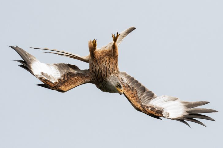 Фото №1 - Вираж на охоте