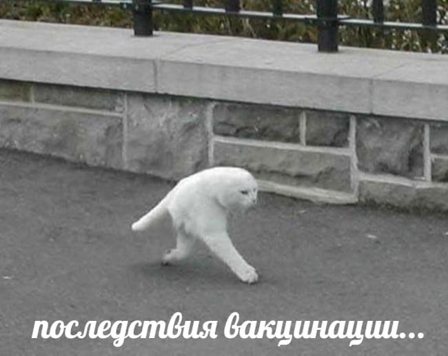 Фото №6 - «Я не одна, я со «Спутником»: посмотрите, как шутят о прививках в соцсетях