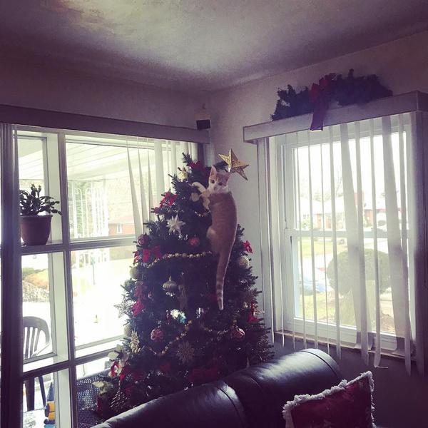 Фото №2 - Кошки против елок: 35 милейших попыток уничтожить Новый год
