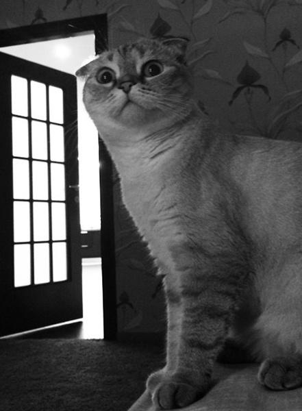 Кошки звезд