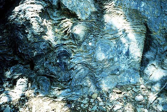 Фото №2 - «Черновики господа Бога»: загадочные организмы докембрия